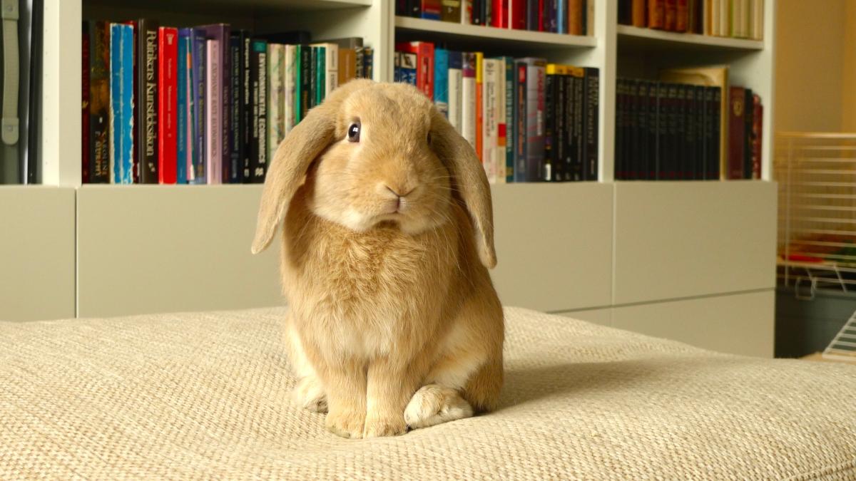Le lapin en appartement : non à la vie en cage !