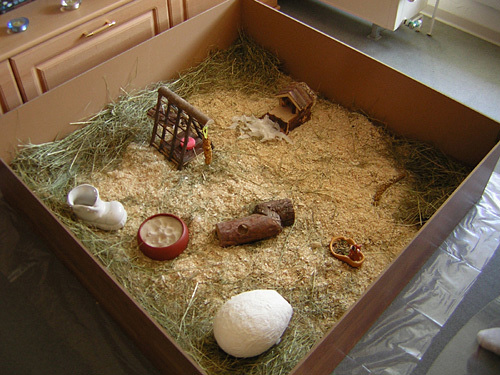 hamster-auslaufgehege.jpg