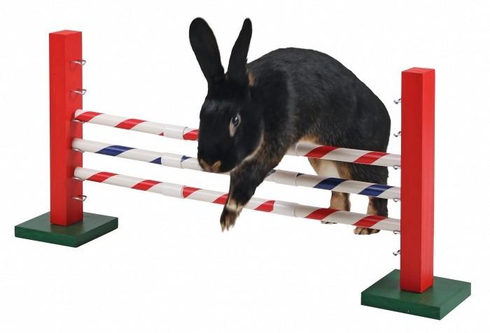 obstacle-en-hauteur-agility-kerbl (1)