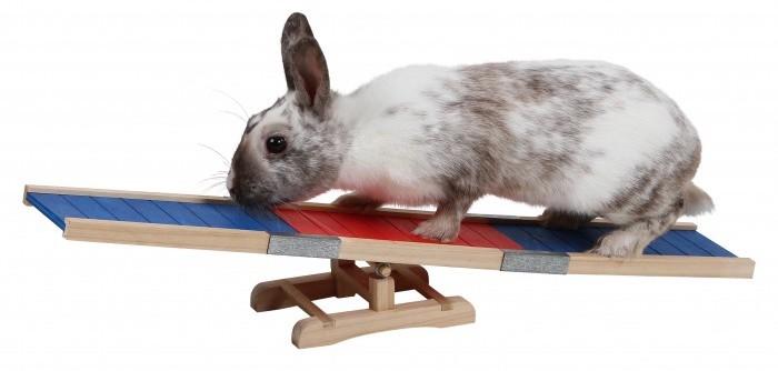 rampe-pour-lapin-agility-kerbl (1)