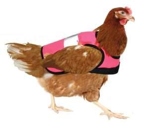 Chicken_hi_vis_jacket_pink_chicken