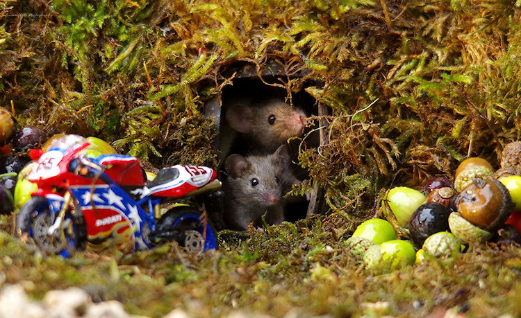 miniature-mice-family-simon-dell-12