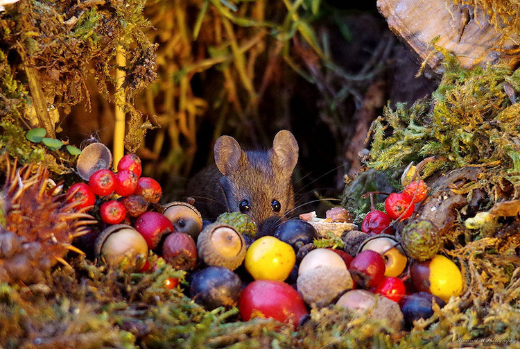 miniature-mice-family-simon-dell-18