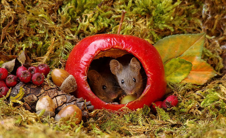 miniature-mice-family-simon-dell-8