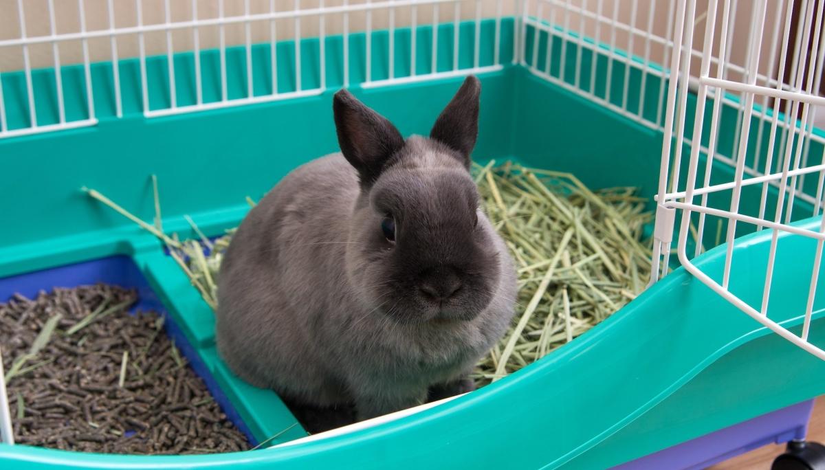 Mon lapin a un comportement bizarre dans sa cage